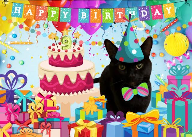 Back cat birthday party