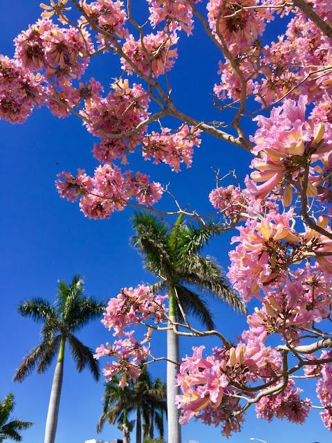 kukkia ja palmuja