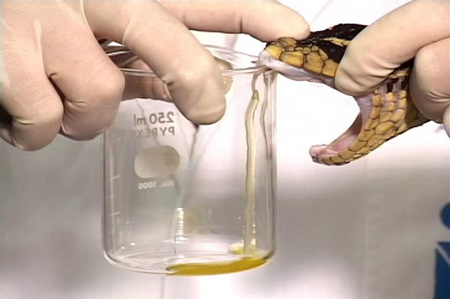Sesap alerta a população sobre estoque reduzido de soro antiveneno
