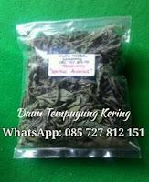 Jual Daun Tempuyung I Kapsul Tempuyung I WA: 085727812151