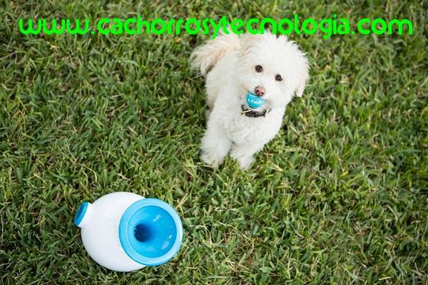 tecnologia cachorros shurkonrad dog can puppy perro 3