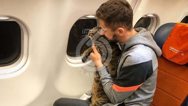 Russia: a passenger penalized because of his cat too heavy