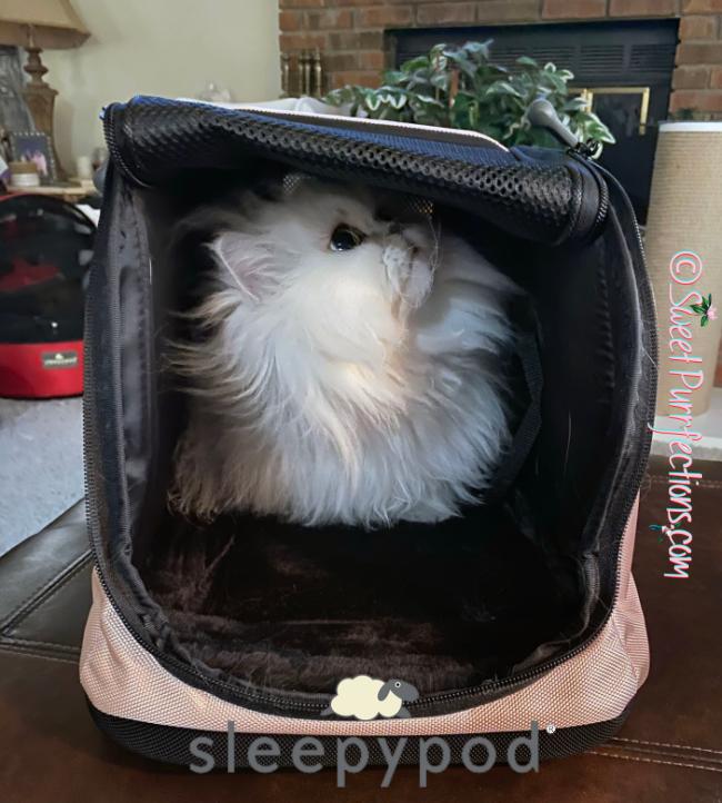Silver Shaded Persian Cat, Brulee, resting inside Sleepypod Air