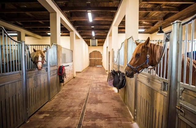 Горздрав Санкт-Петербурга увеличил закупки лошадей для карет скорой помощи