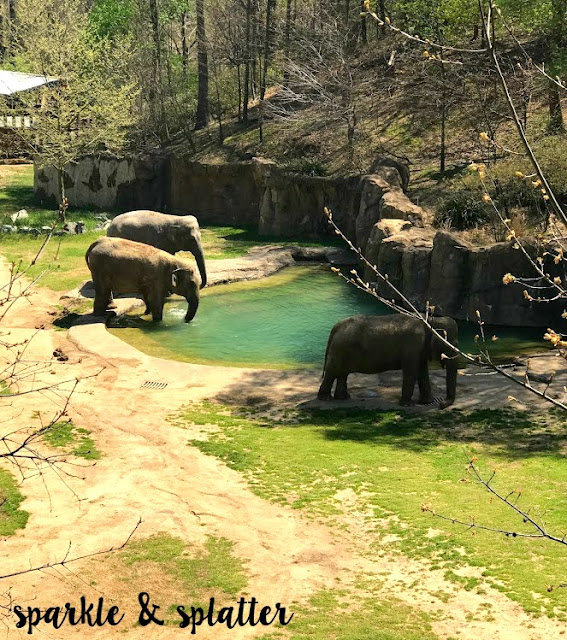 observe children in the zoo Trails of africa is a place where adults and children alike can observe african  wildlife and, in the process, they can also be enlightened about the plight of.