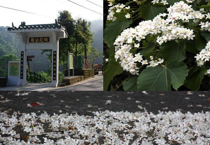 阿米的天空: 土城桐花公園----賞桐花。遇見素未謀面的朋友
