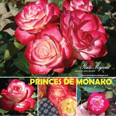 PRINCES DE MONAKO - Princesse de Monaco  Crveno/krem. Hibridna čajevka