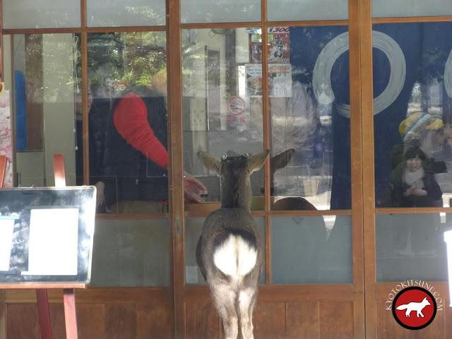 un daim qui attend son tour pour entrer dans un magasin