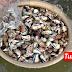 Fenomena siput terdampar di Pantai Rusila gemparkan penduduk