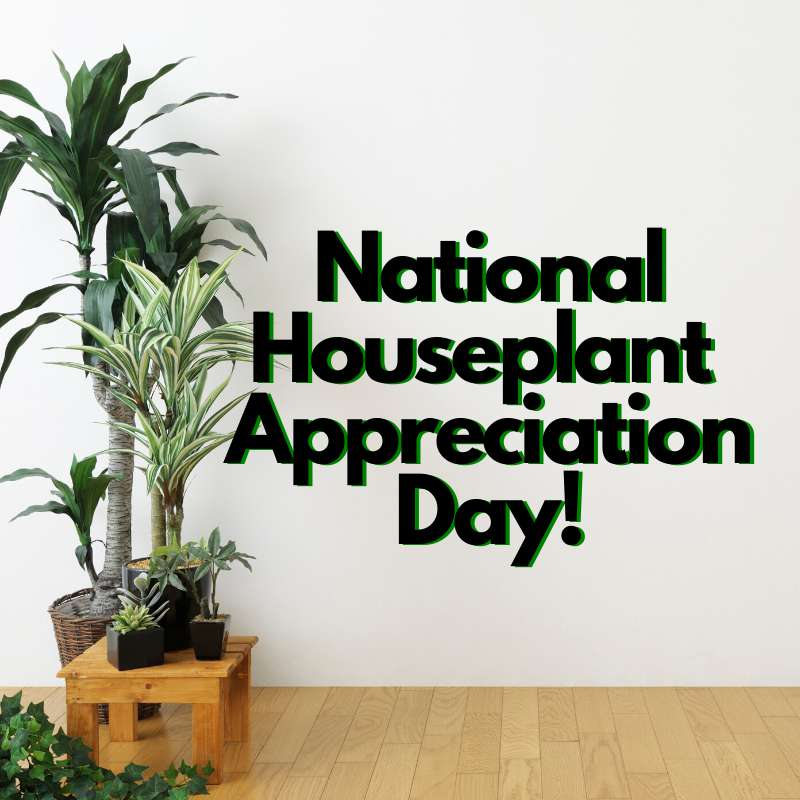 National Houseplant Appreciation Day Wishes Pics