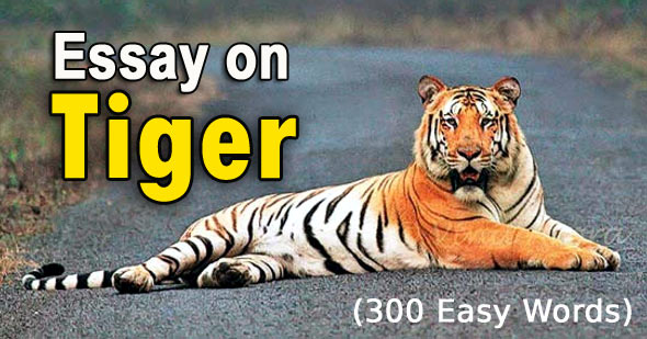 Essay on Tiger