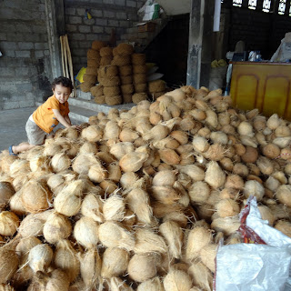 Child with mountain of coconuts for sale