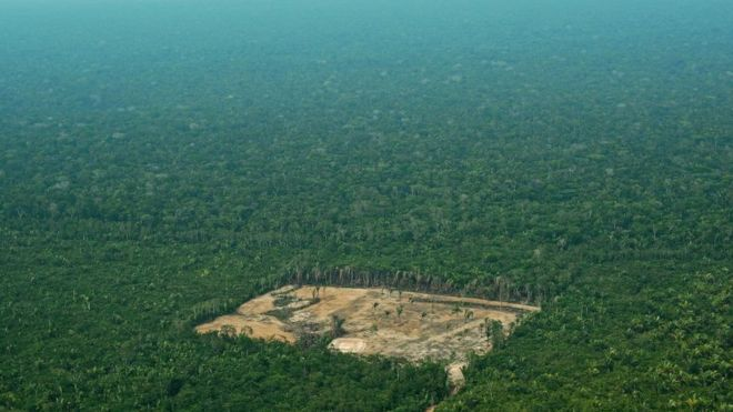 How much of the Amazon has been destroyed?