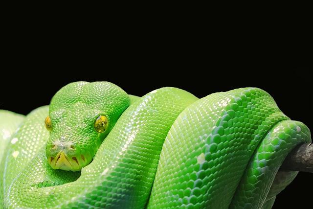 Wörtliste Schlange, Worte die Schlange beinhalten, Schlange Aktivierungen