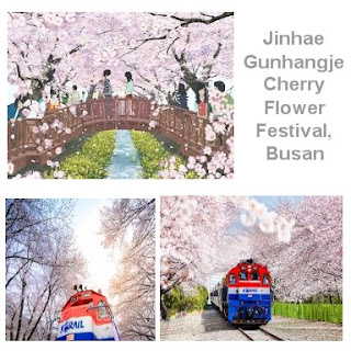 Jinhae Gunhangje Cherry Flower Festival di Busan