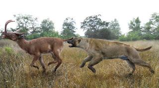 Epicyon haydeni, el perro más grande de la historia