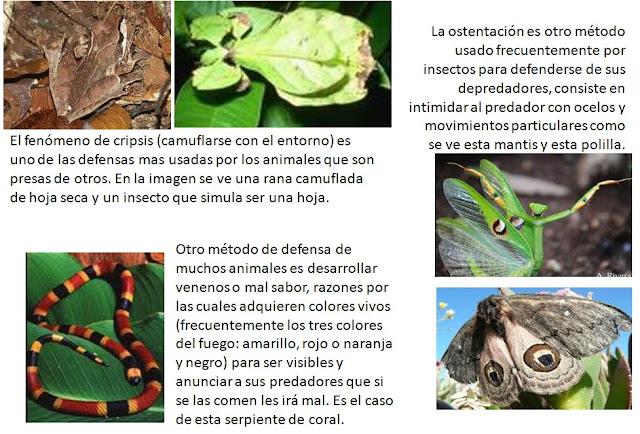 Yacares reproduccion asexual de las plantas