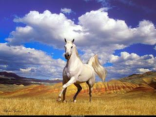 Αποτέλεσμα εικόνας για ασπρο αλογο