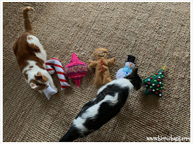 Crafting with Cats Catmas Special - Part 4  ©BionicBasil® Catmas Catnip Toys with Melvyn and Amber