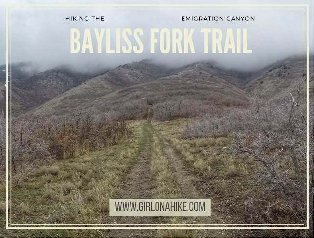 Hiking the Bayliss Fork Trail, Emigration Canyon