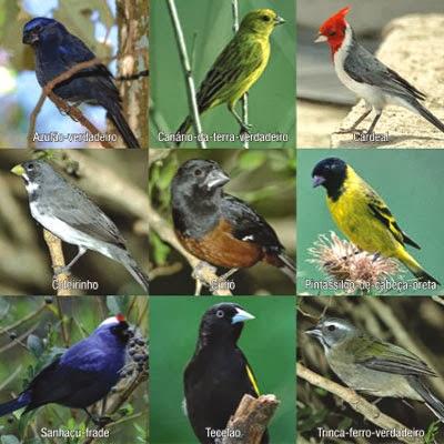 Características gerais das Aves