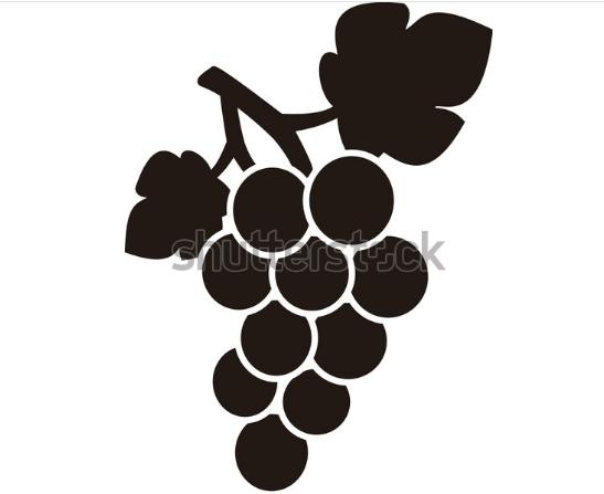 vector illustration grape icon food fruits