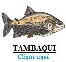 Peixe, Tambaqui