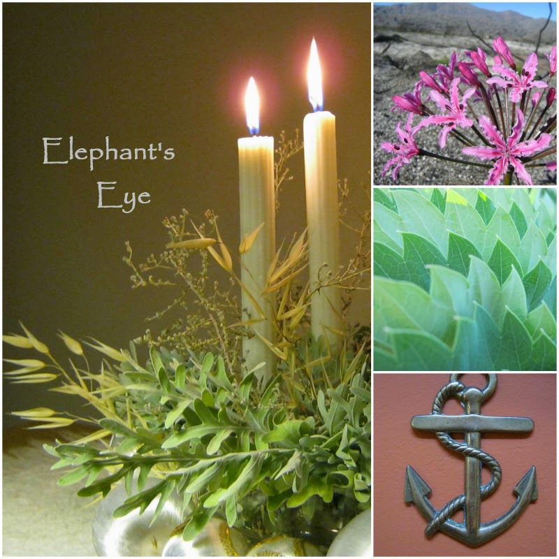 Spring Promise Two Advent candles, fire lily Melianthus leaf brass anchor