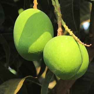Top 10 healthy fruits