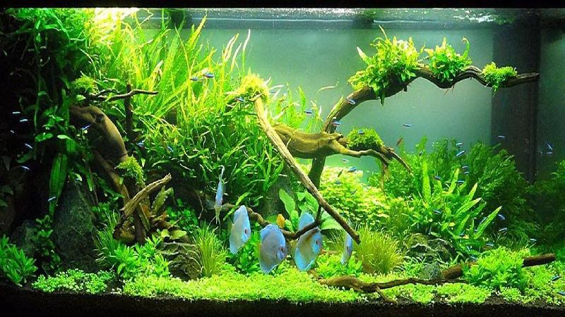 Natural Planted Fish Aquarium