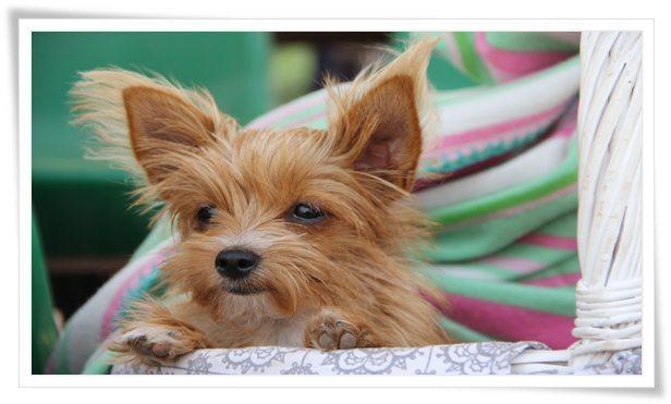 puppy training,obedience training,dog training,puppy obedience training,obedience,maltipoo obedience training,puppy,puppy obedience,puppy training 101,puppy training tips,puppy training basics,training,dog obedience training,basic obedience training,puppy obedience training tips,basic obedience puppy training,puppy dog training,puppy obedience training at home,puppy training schedule,golden retriever puppy training,dog obedience