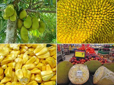 Jackfruit tree, close up jackfruit, pile of fruit pods, jackfruit at Jewel