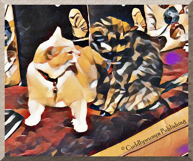 Real Cats Webster and Paisley with Edtaonisl effect #CaturdayArt