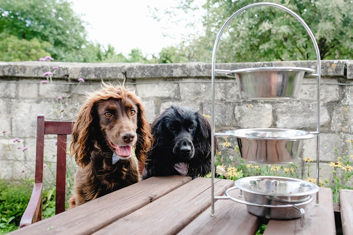 Dog Friendly Guide to Wiltshire