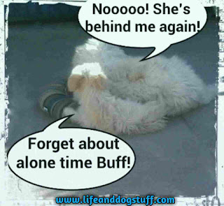 Fluffy puppy sleeping behind Buffy dog