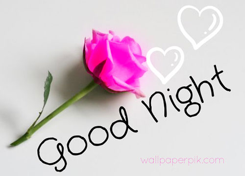 rose good night images flower night wish
