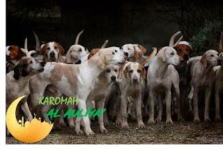 kawanan anjing hau'ab