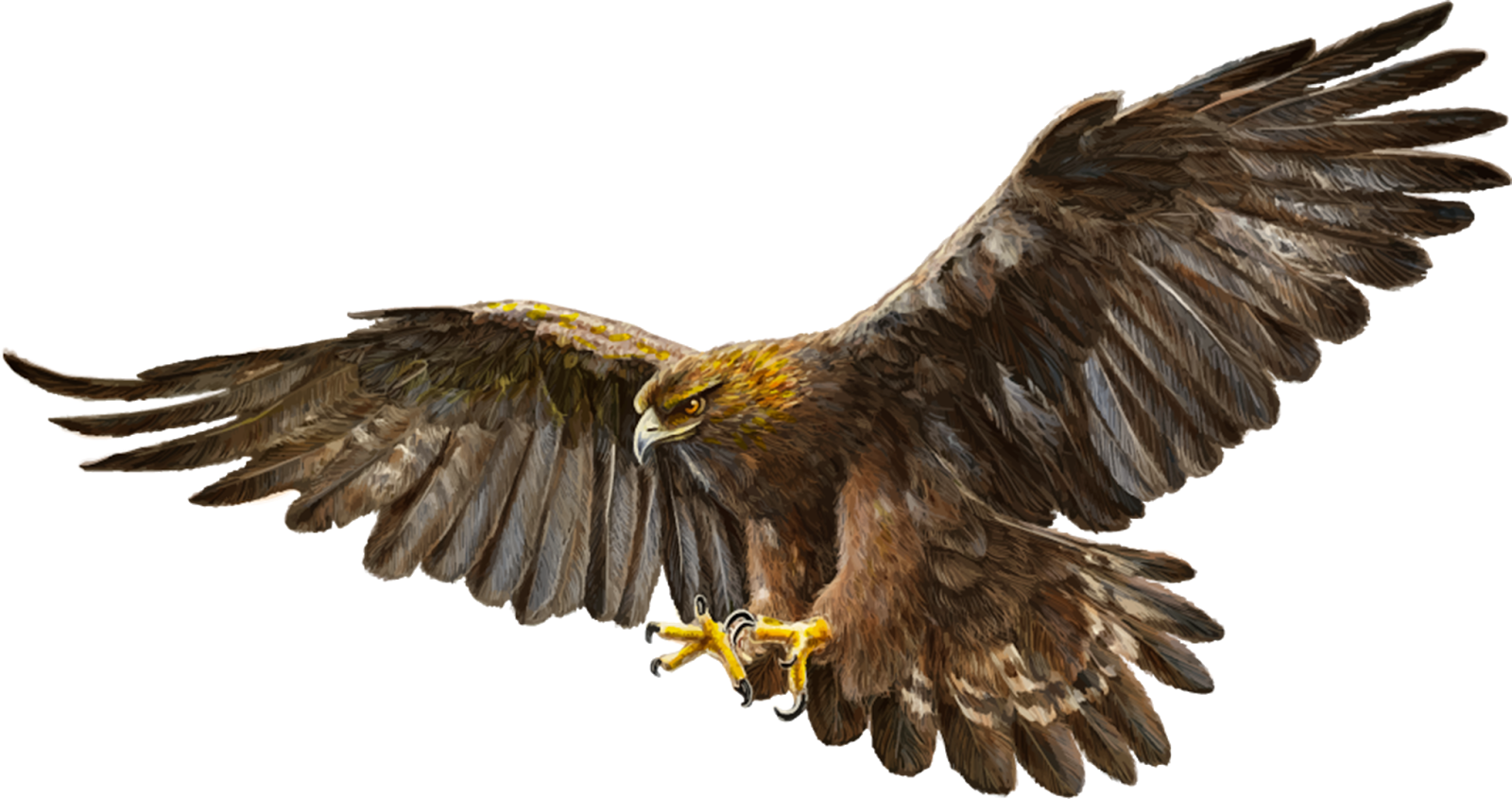 Imagens PNG Águias (Eagles PNG) | Imagens para photoshop