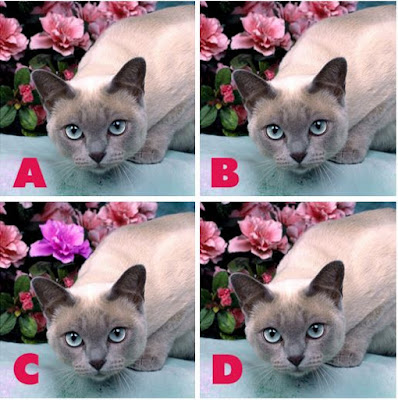 Which image is different? image 11