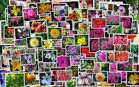 https://angelesroldan.blogspot.com/p/mis-flores.html
