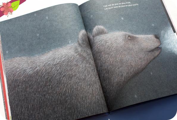 L'ourse de José Ramón Alonso et Lucía Cobo - Didier Jeunesse