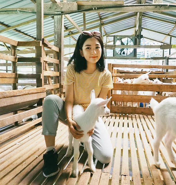 Roadtrip Malaysia motorhome camping penang taipeng gopeng kuala lumpur travel cestlajez blogger malaysian