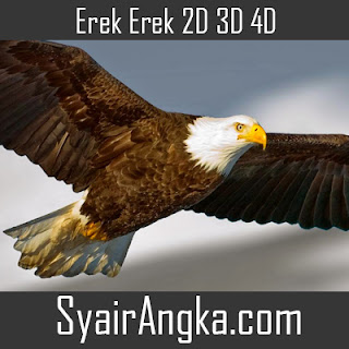 Erek Erek Elang di Buku Mimpi 2D 3D 4D Lengkap