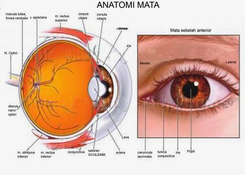 cara merawat mata dengan baik