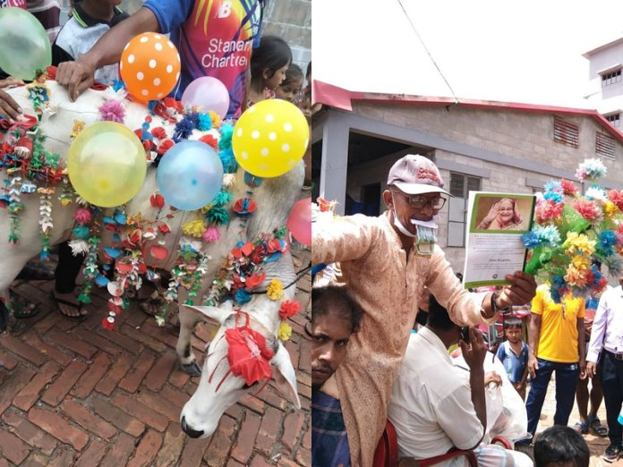 Left: Decorated cow brought for sacrifice. Right: Man holding portrait of PM Haseena (Images: prothomalo)
