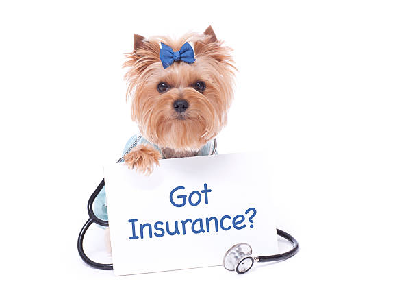 Canadian Pet Insurance – Why You Need It