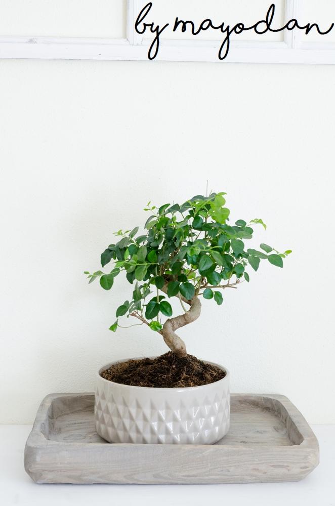 zimmer mit pflanze eine lebenseinstellung und eine. Black Bedroom Furniture Sets. Home Design Ideas