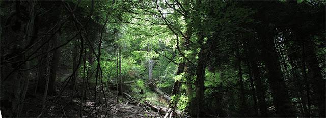 claro de un bosque