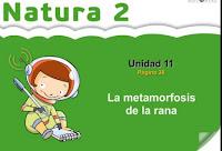 https://bromera.com/tl_files/activitatsdigitals/natura_2c_PF/Natura2-U11-A1_cas.swf