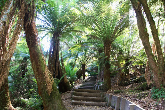 steps through rainforest